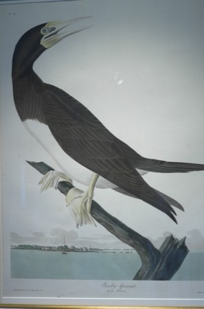 "That cormorant never landed on a branch, it's a swimming bird. This Audubon thing is stranger than I understood. For example, his mother was a ""metisse"" from the Dominican Republic and he went bankrupt before becoming an artist."