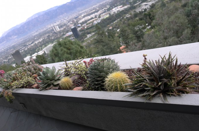 Look at the beautiful cacti.