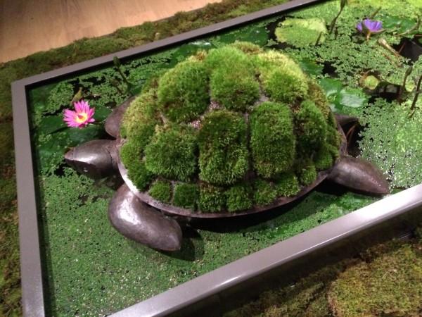 Hey, it's a turtle