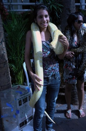 Another Key West hottie… you pay a buck to hold the snake for the photo.